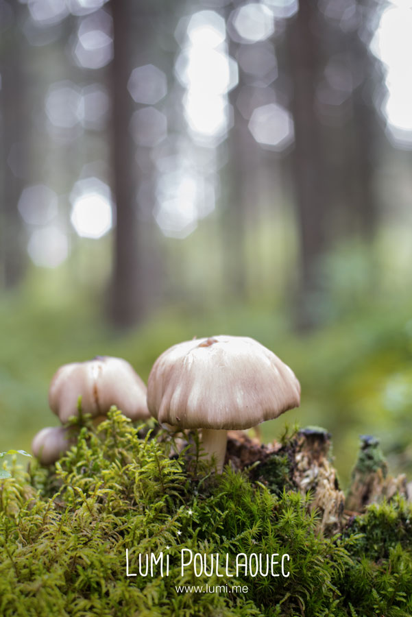 finlande-lumi-poullaouec-photographies-19