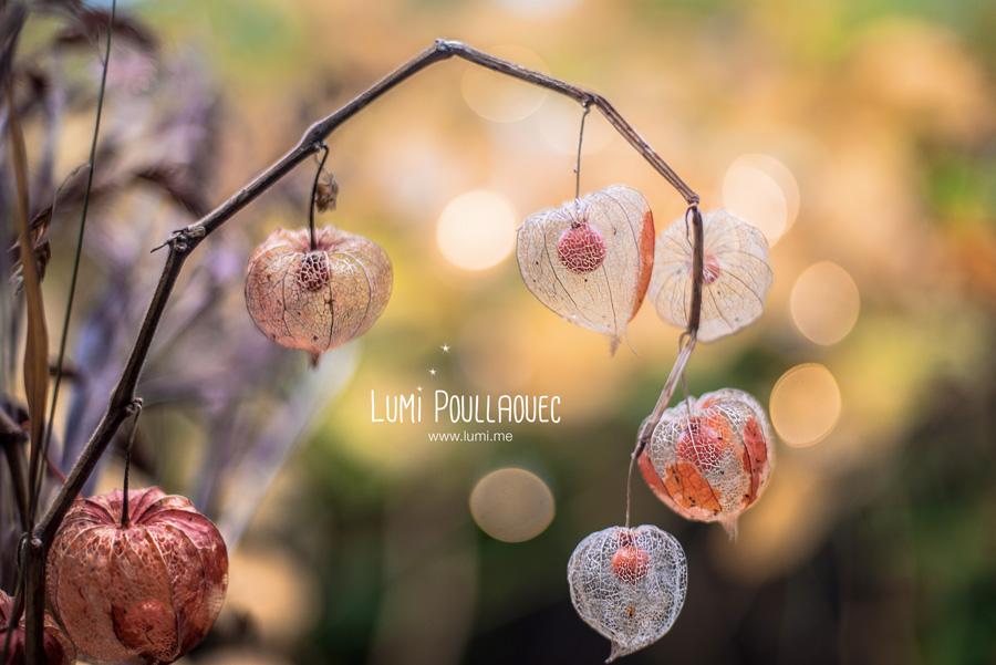 LumiPoullaouec-1-amour-en-cage