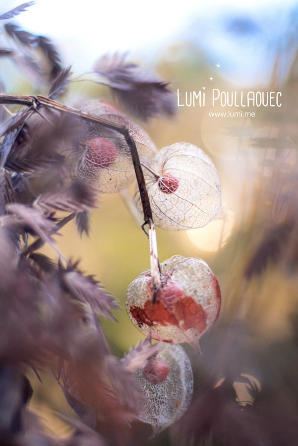 LumiPoullaouec-3